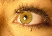 Puzzle les yeux