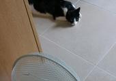 Puzzles 1 chat heureux
