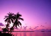 Puzzle en ligne plage paradis
