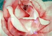 Puzzle bouton de  rose