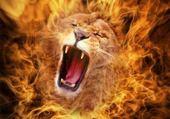 Puzzle lion feu