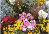 Puzzle parterre de fleurs