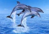 Puzzle Jeux de puzzle : jolie dauphin