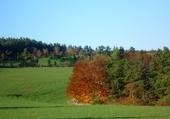 Puzzles automne
