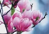 Puzzle Puzzle magnolia rose