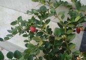 Puzzle Puzzle arbuste