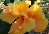 Puzzle Puzzle Hibiscus
