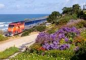 Puzzle Train dan les fleurs