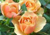 Jeu puzzle roses oranges