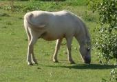 Jeu puzzle cheval