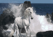Puzzle cheval blanc
