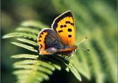 Puzzle Puzzles papillon