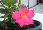 Puzzle fleur du jardin