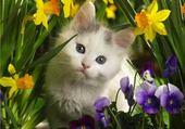 Puzzle en ligne un amour de chat