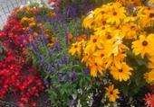 Puzzles massif de fleurs très coloré