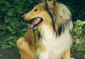 Puzzle lassie