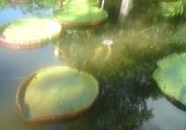 Puzzle en ligne jardin de pamplemousse