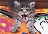 Puzzle Puzzle en ligne Un chaton qui baille