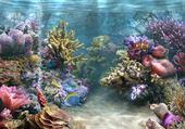 Puzzles splendeur au fond des mers