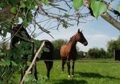 Puzzle gratuit chevaux en normandie