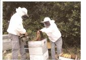 Puzzle Jeux de puzzle : La récolte du miel