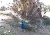Puzzle Puzzle le plus beau oiseau que j'ai vu