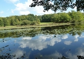 Puzzle étang