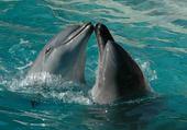 Puzzle Jeu puzzle dauphins