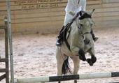 Puzzle sauter a cheval