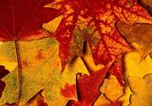 Jeu puzzle autumn