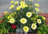 Puzzle gratuit Fleurs