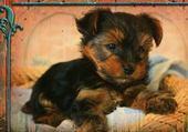 Puzzle bebe yok' terrier