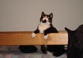 Jeu puzzle chat noir et blanc