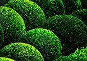 Puzzle Puzzle buissons taillés d'hélène