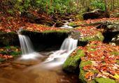Puzzle cascade en sous bois