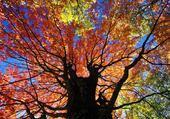 Jeux de puzzle : arbre et lumière