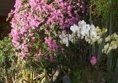 Puzzles fleurie
