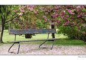 Jeu puzzle jardin public par hélène