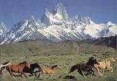 Puzzle les super chevaux sauvage
