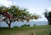 Jeu puzzle Martinique