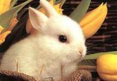 Puzzle le petit lapin