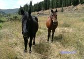 Puzzle chevaux de lorie