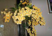 ma belle orchidée jaune