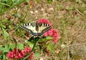 Jeux de puzzle : le papillon