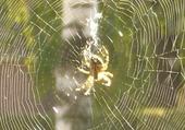 Puzzle Puzzles le chemin des araignées