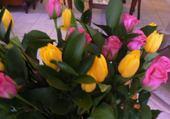 Les fleurs de Juliette