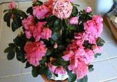 Puzzle Les fleurs de Mifa