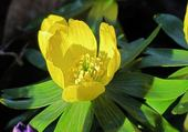 Jeux de puzzle : puzzle fleur