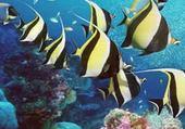 Jeu puzzle Des poissons dans l'océan