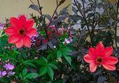Puzzle gratuit puzzle nature fleurs